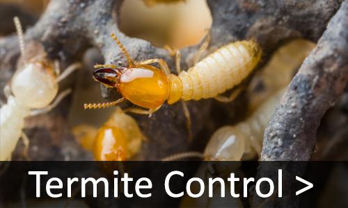Memphis Pest Control Services, Rosie's Pest Control